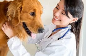 veterinary, repertory